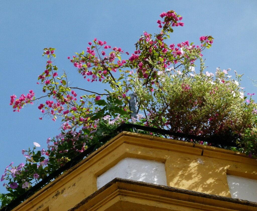 rooftop garden as an example of urban garden