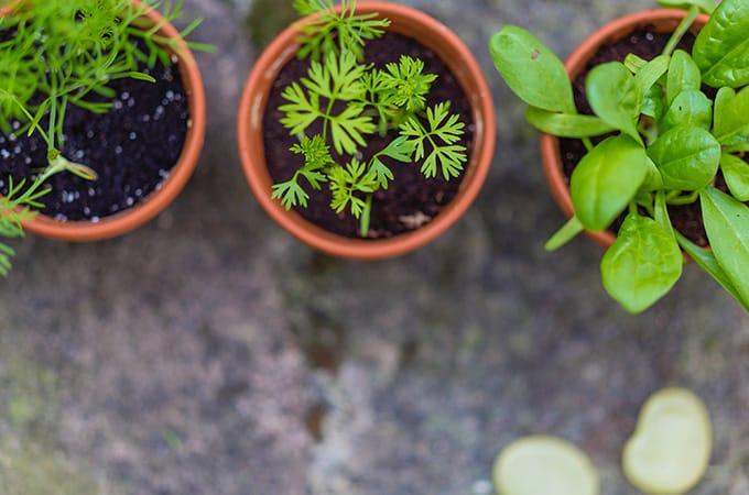 Herb Gardening for Beginners