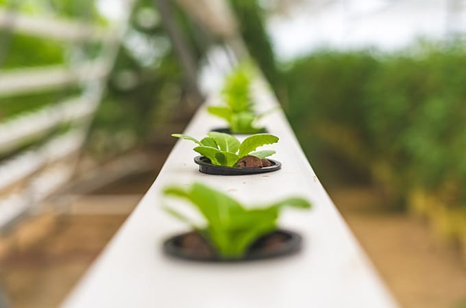 Hydroponics for Beginners: Indoor Gardening Without Soil